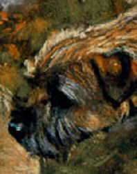 Closeup of Border Terrier Head