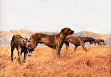 """A Line Abreast"" Rhodesian Ridgeback Fine Art Limited Edition Print by Roger Inman"