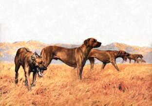"""A Line Abreast"" Rhodesian Ridgebacks Fine Art Limited Edition Print by Roger Inman"