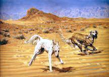 """Hot Pursuit"" Saluki Fine Art Limited Edition Print by Roger Inman"