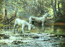 """Bracework at the Ford"" Weimaraner Fine Art Limited Edition Print by Roger Inman"